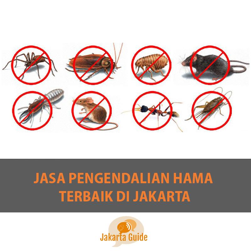 Jasa Pengendalian Hama Terbaik di Jakarta 2017